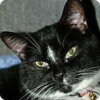Adopt A Pet :: Mambo - Cleveland, OH