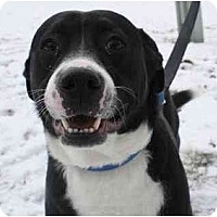 Adopt A Pet :: Smoke - Chicago, IL