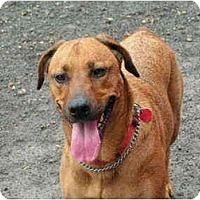 Adopt A Pet :: Betti - Rigaud, QC