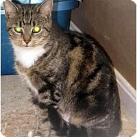 Adopt A Pet :: Lilly - Xenia, OH