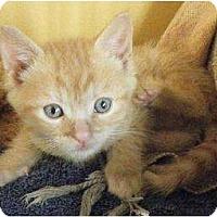 Adopt A Pet :: Schmit - Rigaud, QC