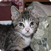 Adopt A Pet :: Denny (LE) - Little Falls, NJ