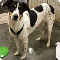 Adopt A Pet :: Barney - Alexis, NC