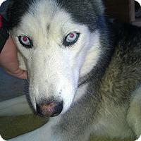Adopt A Pet :: Journey - Plano, TX
