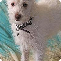Adopt A Pet :: Chip - Yuba City, CA