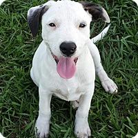 Adopt A Pet :: Sport - Orange Lake, FL