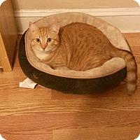Adopt A Pet :: Abner - Speonk, NY