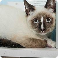 Adopt A Pet :: Huck - New York, NY