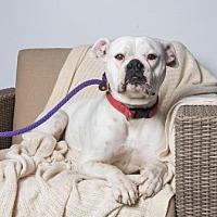 Adopt A Pet :: Lili - Santa Paula, CA