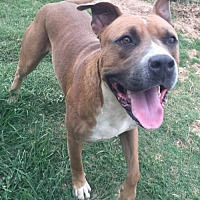 Adopt A Pet :: Buck - Clifton, TX