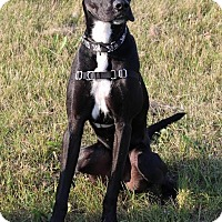 Adopt A Pet :: Pebbles - Saskatoon, SK