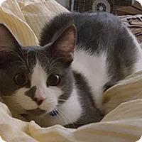 Adopt A Pet :: C18 Litter-Pete - Livonia, MI