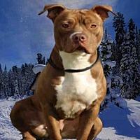 Adopt A Pet :: SADIE - Fairfield, CA