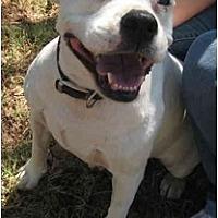 Adopt A Pet :: Sunny - Blanchard, OK