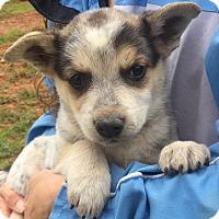 Adopt A Pet :: Ranger (6 lb) Video - Burlington, VT