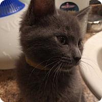 Adopt A Pet :: Roz - Mustang, OK