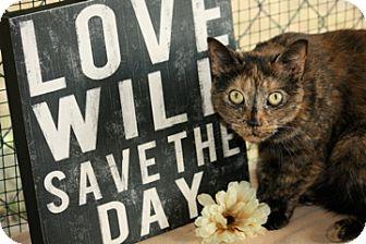 Domestic Shorthair Cat for adoption in Dover, Ohio - Ebbie