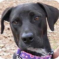 Adopt A Pet :: Roxy2 - Kingwood, TX
