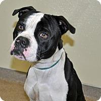 Adopt A Pet :: Nico - Port Washington, NY