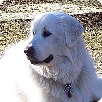 Adopt A Pet :: Katie - Tipp City, OH