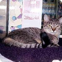 Adopt A Pet :: Tiggy - Scottsdale, AZ