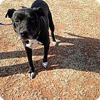 Adopt A Pet :: Jasper - Blanchard, OK