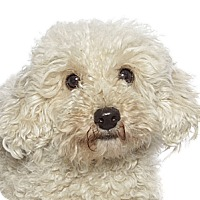 Adopt A Pet :: Wendy - Fort Lauderdale, FL