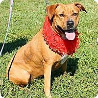 Adopt A Pet :: Lady - Jupiter, FL