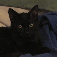 Adopt A Pet :: Clover - Plattekill, NY