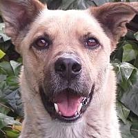 Adopt A Pet :: ZZ-Pete *courtesy post - Rancho Santa Margarita, CA