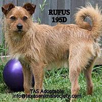 Adopt A Pet :: Rufus - Spring, TX