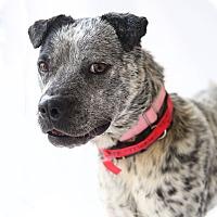 Adopt A Pet :: Merle - Marietta, GA
