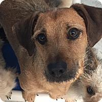 Adopt A Pet :: George - Joplin, MO