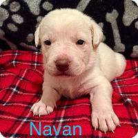 Adopt A Pet :: Navan - Moyock, NC