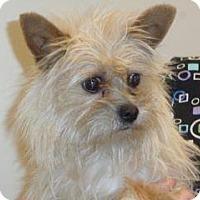 Adopt A Pet :: 347711 - Wildomar, CA