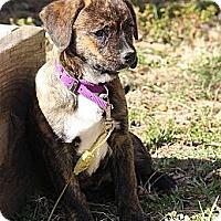 Adopt A Pet :: Matilda - Staunton, VA