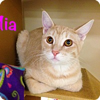 Adopt A Pet :: Mia - Foothill Ranch, CA