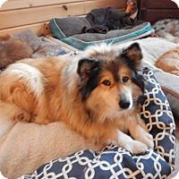 Adopt A Pet :: Kati Bear (WV) - Alderson, WV