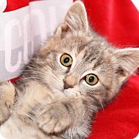 Adopt A Pet :: Sprite - Xenia, OH