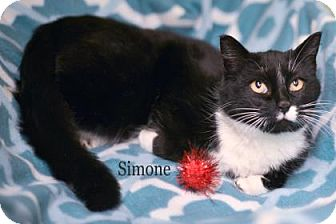 Domestic Shorthair Cat for adoption in West Des Moines, Iowa - Simone