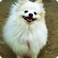 Adopt A Pet :: Mickey - New York, NY