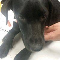 Adopt A Pet :: Jennifer - Livingston Parish, LA