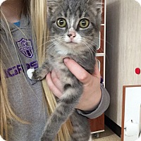 Adopt A Pet :: Candy - Breese, IL