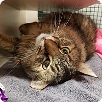 Adopt A Pet :: Lennox - Cherry Hill, NJ
