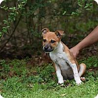 Adopt A Pet :: Felicia - Groton, MA