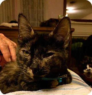 Adopt A Pet :: Kyoto  - Dallas, TX