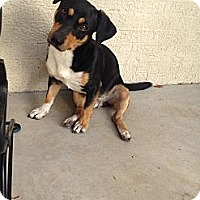 Adopt A Pet :: Buster - Wytheville, VA