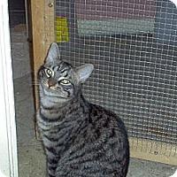 Adopt A Pet :: Mesquite - Toronto, ON