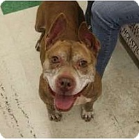 Adopt A Pet :: Dee Dee - Albany, NY