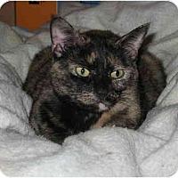 Adopt A Pet :: Angie - Cincinnati, OH